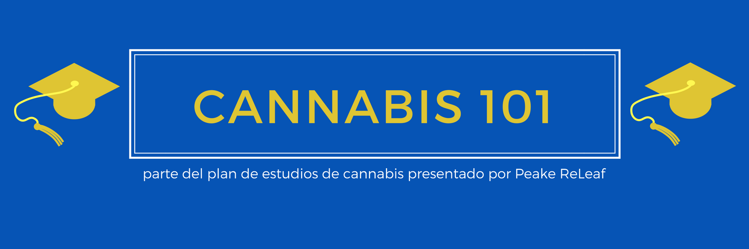 Cannabis 101 Spanish Banner