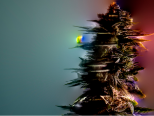 Multi colored art of cannabis plant