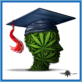College graduate image made up of cannabis leaves