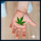 A child holding a cannabis leaf in their hand