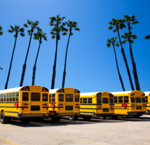 Image of several yellow school buses in a row
